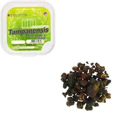 Tampanensis Magic Truffels (Psilocybe) smartific.nl