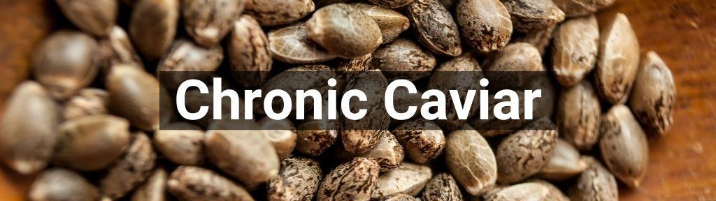 ✅ Alle Chronic Caviar producten - Smartific.com
