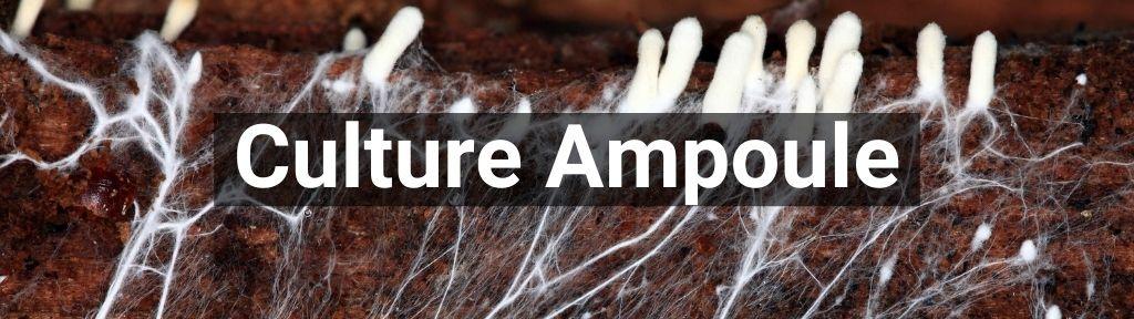 ✅ Alle Culture Ampoule producten - Smartific.com