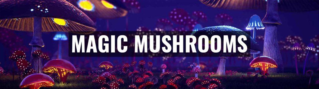 ✅ Magic Truffles - Magic mushrooms, truffles, Grow kits, spray spores and much more! - Smartific.com