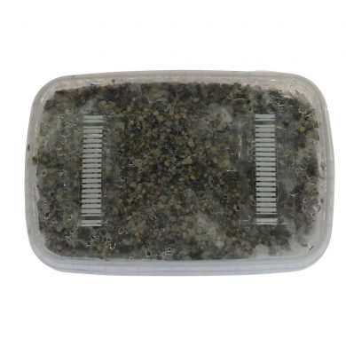 ✅ McSmart Mexican Paddo Grow Kit (Stropharia Cubensis) 1200cc analyse - Magische Paddo's - Smartific.com