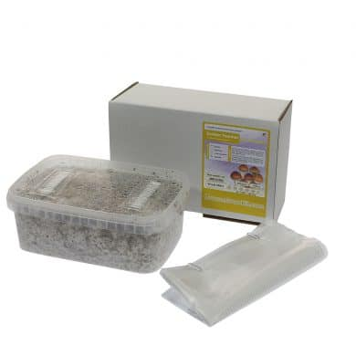 ✅ McSmart Golden Teacher Paddo Grow Kit (Psilocybe Aurumescens) 1200cc analyse - Magische Paddo's - Smartific.com