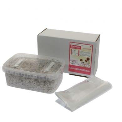 ✅ McSmart Mazatapec Paddo Grow Kit (Psilocybe Mayiescens) 1200cc analyse - Magische Paddo's - Smartific.com