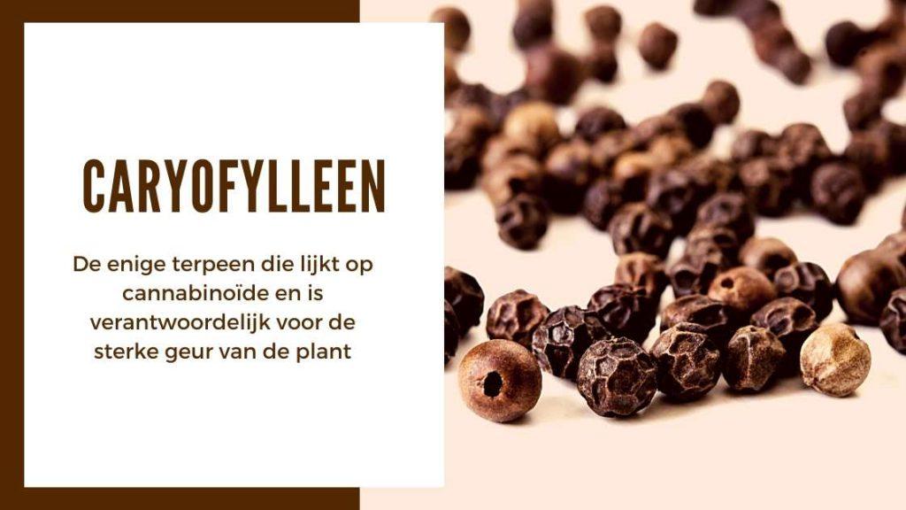 ✅ Ultieme Terpenen Gids - Caryofylleen - Smartific