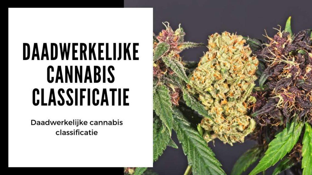 ✅ Ultieme Terpenen Gids - Daadwerkelijke cannabis classificatie - Smartific