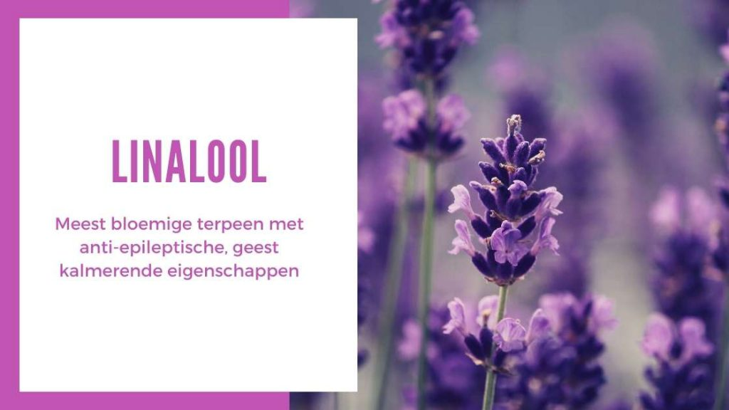 ✅ Ultieme Terpenen Gids - Linalool - Smartific