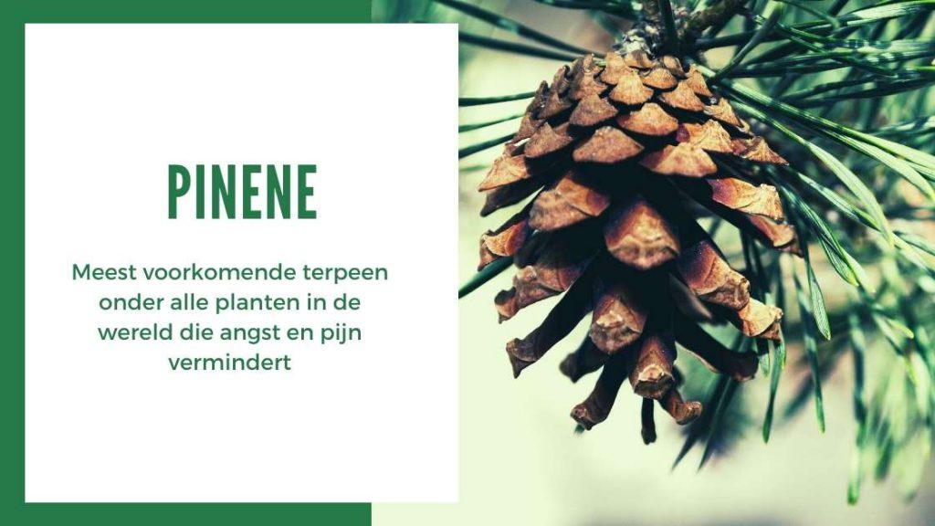 ✅ Ultieme Terpenen Gids - Pinene - Smartific