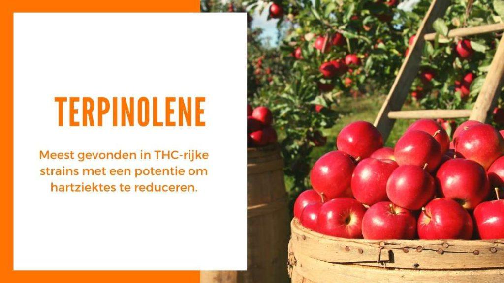 ✅ Ultieme Terpenen Gids - Terpinoleen - Smartific