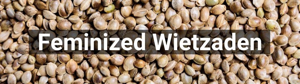 ✅ Alle hoge kwaliteit Feminized wietzaden producten van Smartific.nl