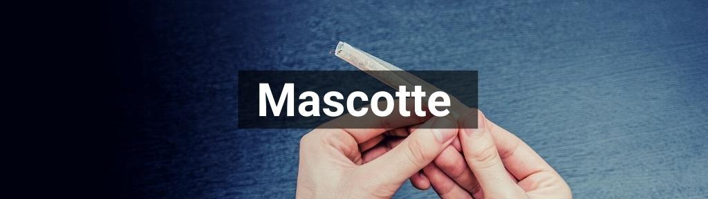 ✅ Alle hoge kwaliteit Mascotte producten van Smartific.nl