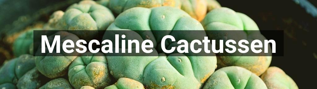 ✅ Alle hoge kwaliteit Mescaline Cactussen producten van Smartific.nl