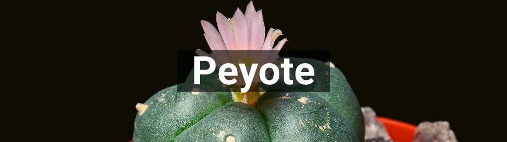 ✅ Alle hoge kwaliteit Peyote producten van Smartific.nl