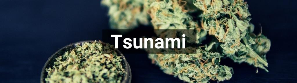 ✅ Alle hoge kwaliteit Tsunami producten van Smartific.nl