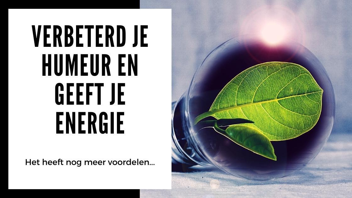 Alles wat je moet weten over Kanna - smartific.nl advies blog (2)