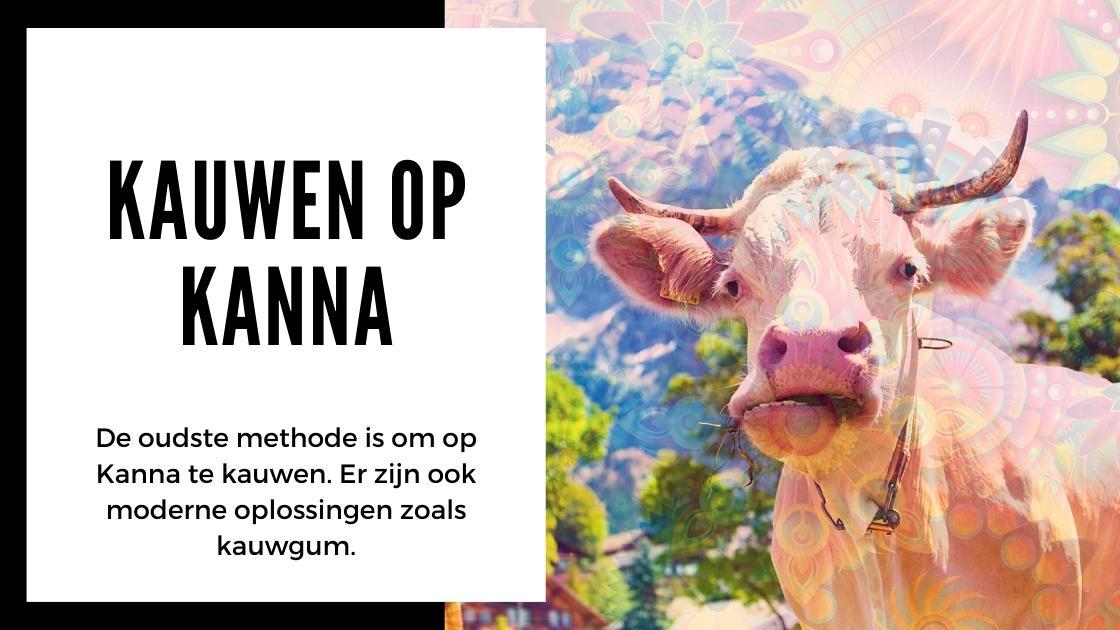 Alles wat je moet weten over Kanna - smartific.nl advies blog (4)