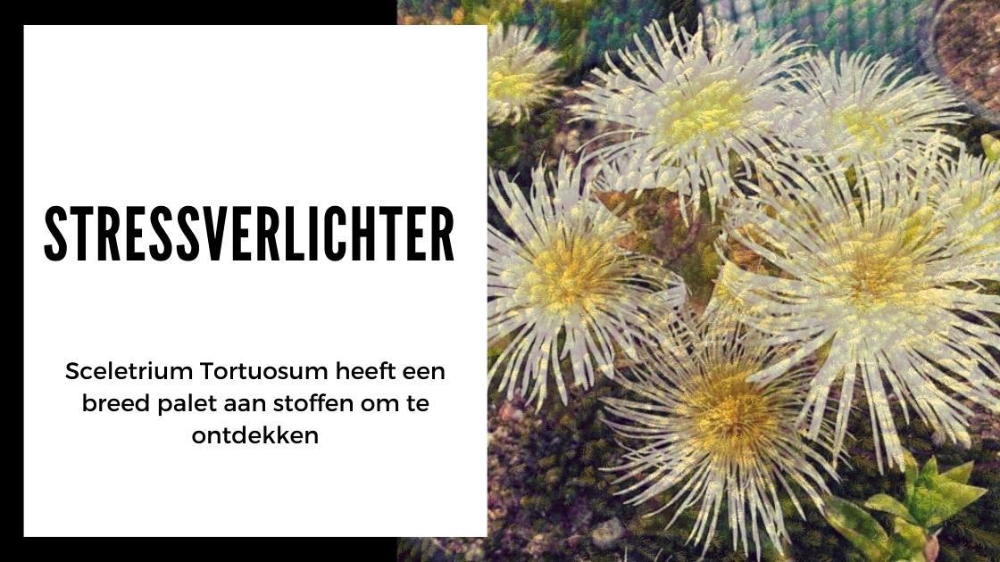 Alles wat je moet weten over Kanna - smartific.nl advies blog