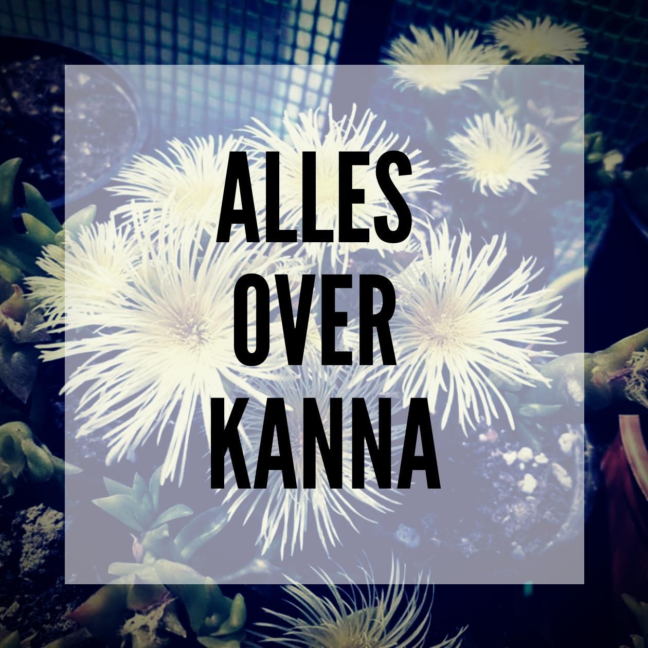 Alles wat je moet weten over Kanna - smartific.nl advies blog thumbnail