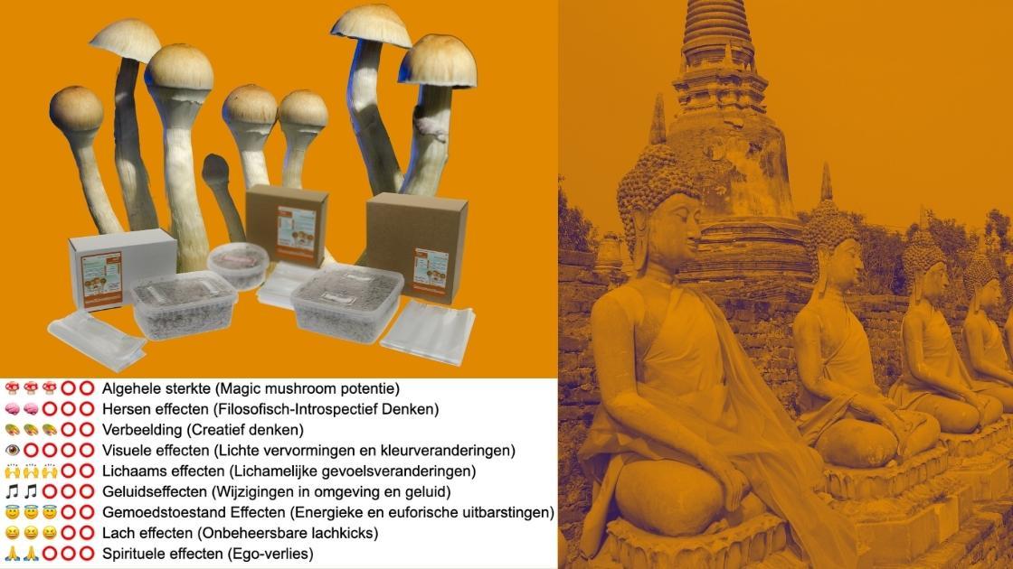 Thai kweekset Pluspunten en Minpunten