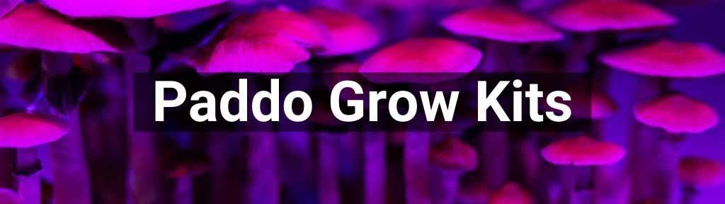 Paddo grow kits - kweeksets