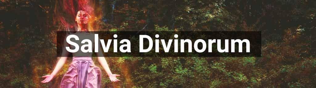 Salvia Divinorum te koop bij Smartific