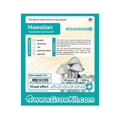 Hawaiian Copelandia Cyanescens Paddo Kweekset